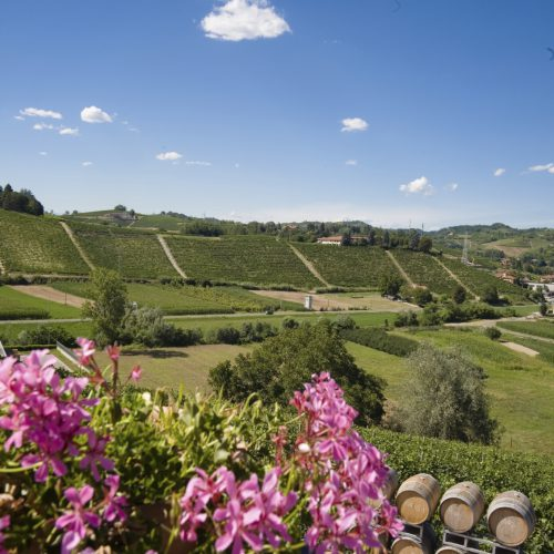 wine barrels in a winery; Langhe Roero, Italy with a beautiful blu sky